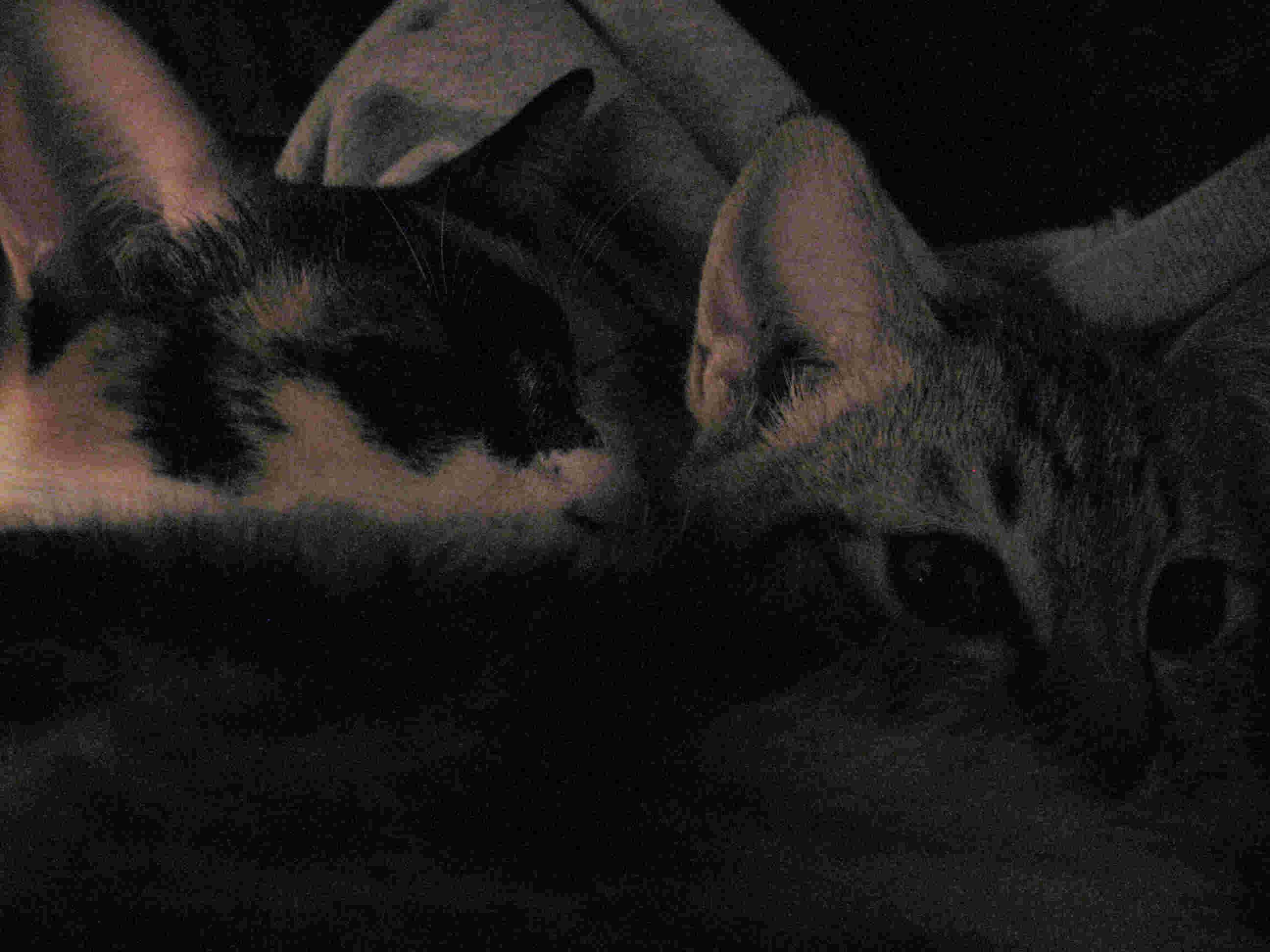 大猫与小猫的睡眠
